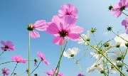 Hoa trong công viên mưa