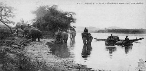 Một số tư liệu trong việc nuôi voi công ngày xưa