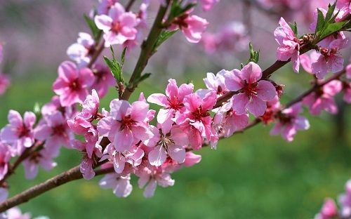 Mùa xuân hát khúc đưa tình
